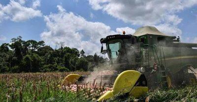 Aguda sequía amenaza producción energética y la agricultura en Brasil