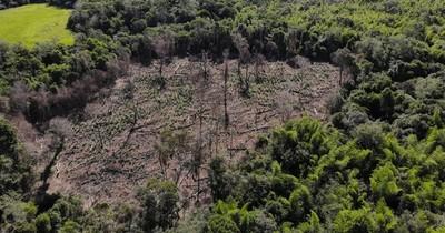 La Nación / Urgen intervención del Estado ante masiva destrucción de reserva San Rafael