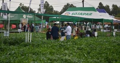La Nación / Variedad de soja cuenta con mayor receptividad en el Chaco paraguayo