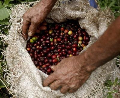 Las exportaciones de café de Colombia caen un 52 % en mayo por bloqueos viales