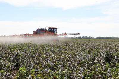 Resaltan bondades del algodón en el Chaco