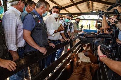 Segundo periodo de vacunación contra la fiebre aftosa alcanzó a 4.794.384 bovinos
