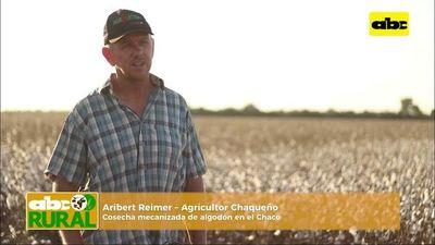 Abc Rural: Algodón revive en el Chaco cosecha mecanizada