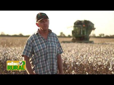 Abc Rural: Oportunidad de crecimiento del algodón en el Chaco