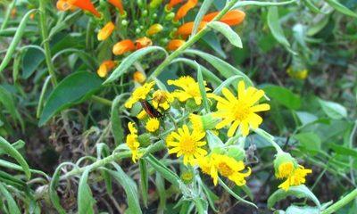 Pohã ñana: más evidencias de la importancia de la biodiversidad