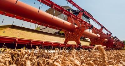 La Nación / Últimas lluvias favorecen cultivos de trigo y maíz