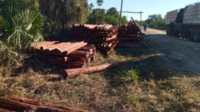 Invaden y sacan madera de propiedad privada en Puerto Casado