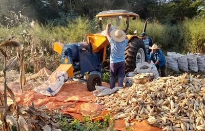Agricultores beneficiarios del proyecto Diafpa, destacan mejoras en su producción