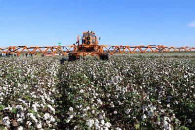 Titular del MAG destaca producción de algodón en el Chaco