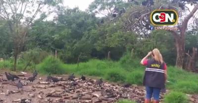 Intervienen matadero equino en Carapeguá