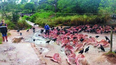 Carapeguá: intervienen matadero de caballos