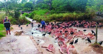 Intervienen matadero de caballos en Carapeguá