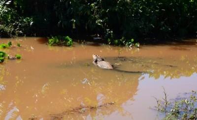 Comuna cuenta con inventario de biodiversidad del Lago de la República