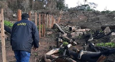 Ybycuí: intervención por un hecho de tala y quema de árboles nativos