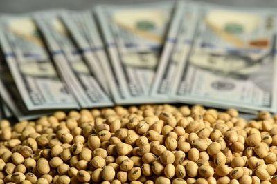 Ante perspectiva de fortalecimiento del dólar, precio de la soja comienza a contraerse