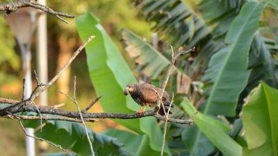 Dos aves  en peligro de extinción habitan en el Lago de la República