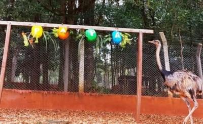 Aves del Centro Ambiental tuvieron un festín por el Día del Padre