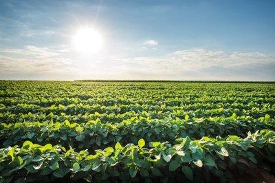 Soja y otros generarían USD 1.470 millones más en 2021