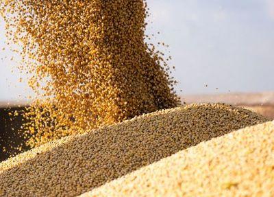 Con leve repunte, precio de la soja inicia la semana en USD 506 la tonelada