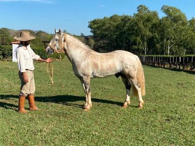 Hoy martes, El Rodeo vende Criollos de liquidación de cabaña Cobaner y La Estrella