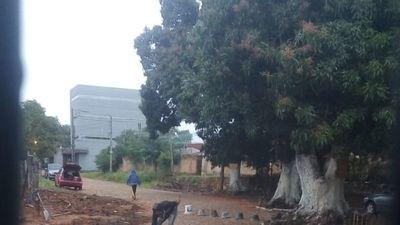 Denuncian a vecino por cerrar calle y cortar árboles