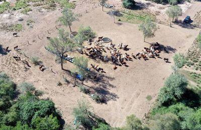 Tácticas y estrategias para la época invernal en ganadería