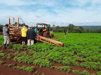 Paraguay arranca cultivo de cáñamo para producción de cannabis no psicoactivo con fines industriales