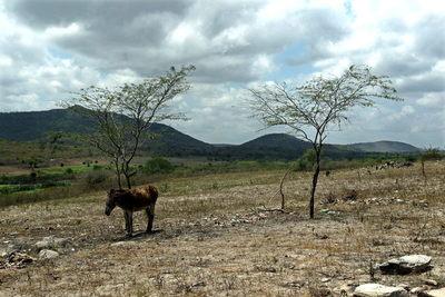 La peor sequía en décadas pone en alerta la energía y el campo de Brasil