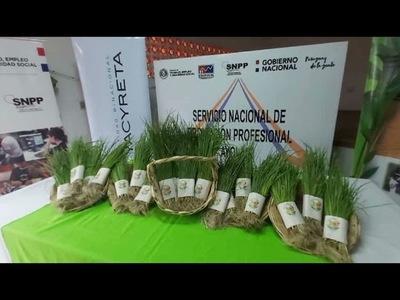 Con 'Koga Tembi´urã' inician distribución gratuita de plantínes de cebolla de bulbo para el consumo