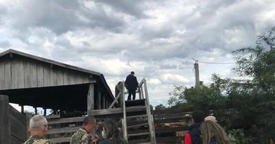 La Nación / Alto Paraguay: Fiscalía se constituyó en estancia El Tigre e incautó 560 cabezas de ganado