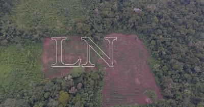 La Nación / Mbaracayú: El pulmón de Canindeyú ante el desafío de la conservación