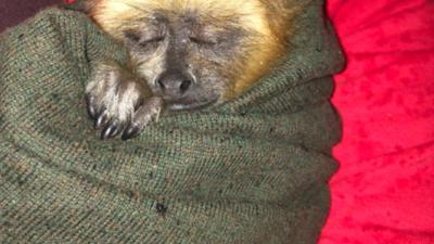 Rescatan a lechuzas y mono que estaban a la venta en redes sociales