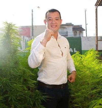 Candidato a Concejal y el aceite de Cannabis Gratis para los Pedrojuaninos