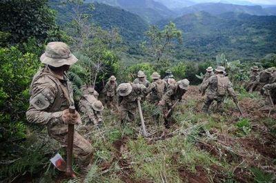 La producción potencial de cocaína en Bolivia alcanzó un nuevo récord en 2020