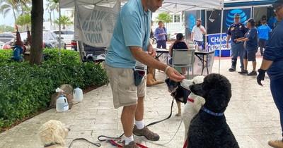 La Nación / Tragedia en Miami: perros de terapia brindan calma en medio del trauma del derrumbe