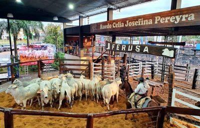 Ferusa comercializó 819 cabezas, el 100% de la oferta, en feria de reproductores de Ganadera Alborada