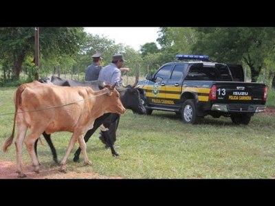 ANIMALES SUELTOS PUEDEN SER SACRIFICADOS, ADVIERTEN