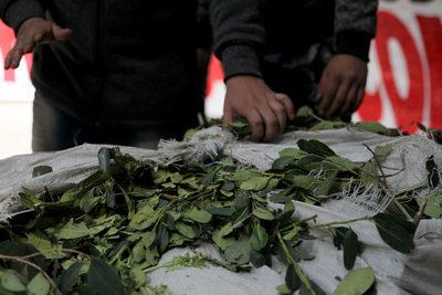 Industriales de Argentina cuestionan límite a nuevos cultivos de yerba mate