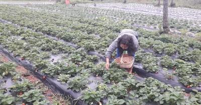 La Nación / Productores de Itá preocupados ante la posible pérdida de sus productos frutihortícolas