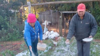 Productor combate heladas con cenizas para sus cultivos