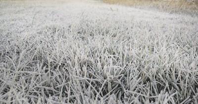 La Nación / Frutihortícolas, maíz, caña dulce y sector ganadero fueron afectados por heladas