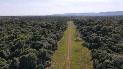 Antinarcóticos allanó establecimiento rural y destruyó pista clandestina de aterrizaje