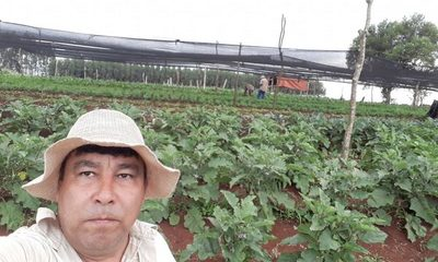 Bajas temperaturas destruye plantación de productores en Alto Paraná