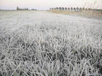 Frutihortícolas, maíz, caña dulce y sector ganadero fueron afectados por heladas