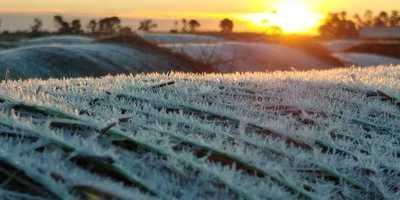 Frío polar golpea con fuerza a granos, frutihortícolas y pasturas: pérdidas millonarias