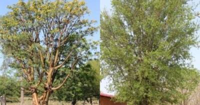 La Nación / Estudio revela datos de monitoreo permanente de bosques del Paraguay