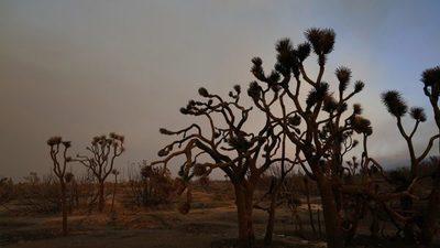 Multan con USD 18.000 a pareja que derribó decenas de árboles de una especie en peligro
