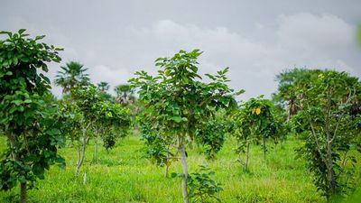 Usarán tecnología para controlar 50 millones de árboles