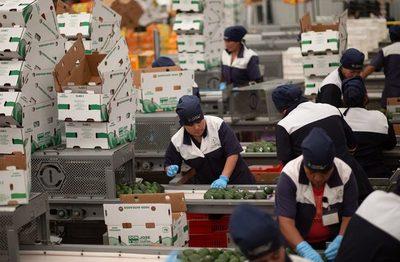 Sector privado mexicano eleva pronóstico de crecimiento a un 5,80 % del PIB