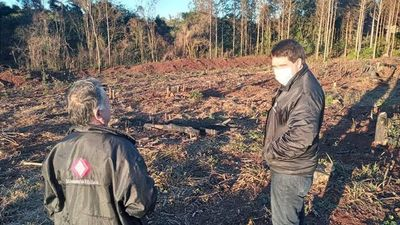 Constatan tala y quema de árboles nativos, en la zona sur del Alto Paraná